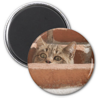 Cat Curious Young Cat Cat's Eyes Attention Wildcat Magnet