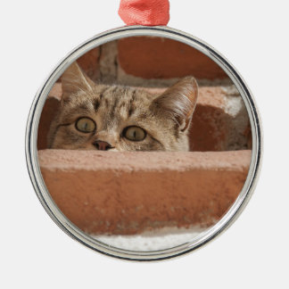 Cat Curious Young Cat Cat's Eyes Attention Wildcat Metal Ornament