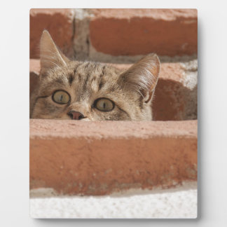 Cat Curious Young Cat Cat's Eyes Attention Wildcat Plaque