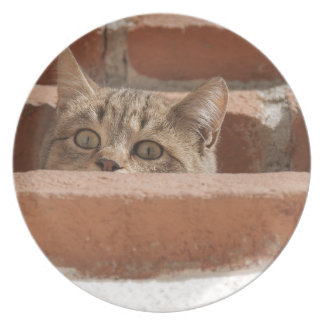Cat Curious Young Cat Cat's Eyes Attention Wildcat Plate
