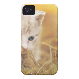 Cat Cute Cat Baby Kitten Pet Animal Charming iPhone 4 Case-Mate Case