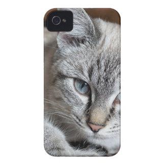Cat Domestic Cat Kitten Mieze Mackerel Pet iPhone 4 Case