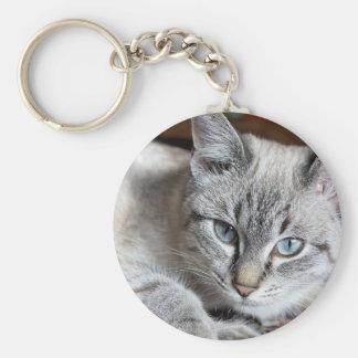 Cat Domestic Cat Kitten Mieze Mackerel Pet Key Ring