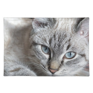 Cat Domestic Cat Kitten Mieze Mackerel Pet Placemat