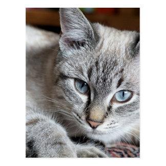 Cat Domestic Cat Kitten Mieze Mackerel Pet Postcard