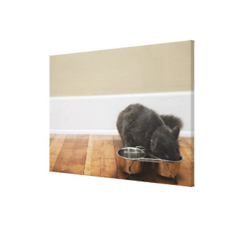 Cat eating from bowl gallery wrapped canvas