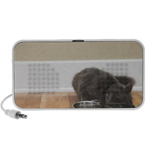 Cat eating from bowl notebook speakers