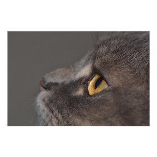 Cat Eye-Macro Photographic Print