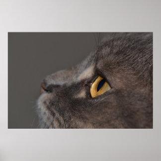 Cat Eye-Macro Poster