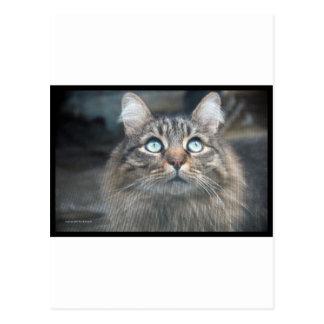 Cat eyes 1 postcard
