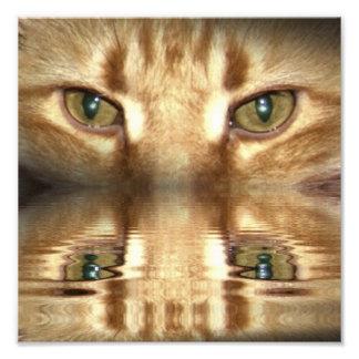 Cat Eyes Photo Print