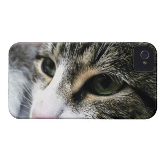 Cat Face BlackBerry Bold Case