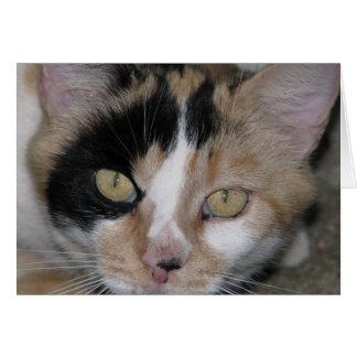 Cat Face Card