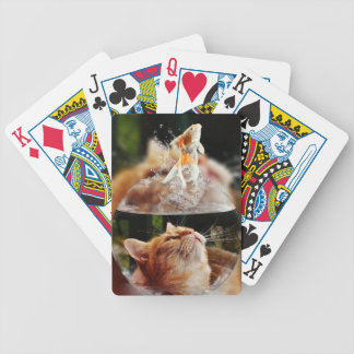 Cat Face Goldfish Glass Close View Eyes Portrait Bicycle Playing Cards
