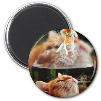Cat Face Goldfish Glass Close View Eyes Portrait Magnet