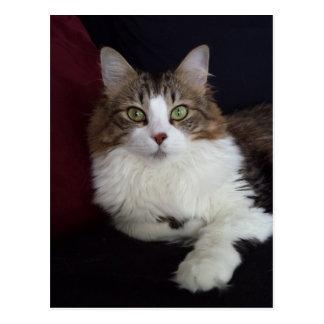 Cat Face Postcard