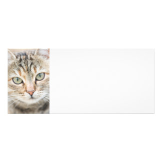 Cat face rack card