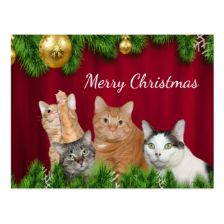 Cat family Christmas Postcard