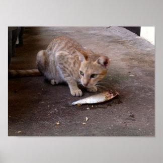 Cat & Fish Poster