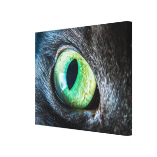 Cat Green Eye Close-Up Canvas Print