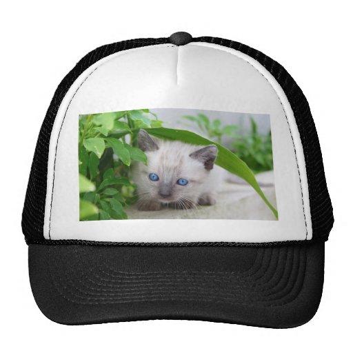 Cat Mesh Hats