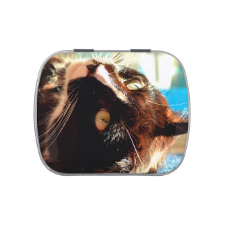cat head in sunlight neat animal feline image jelly belly candy tins