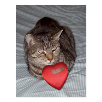Cat Heart Bandaid Postcard