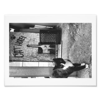 Cat Hotel Photographic Print