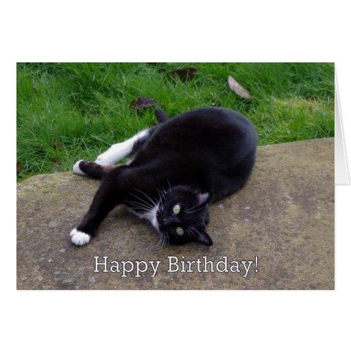 Cat Humor Birthday Card