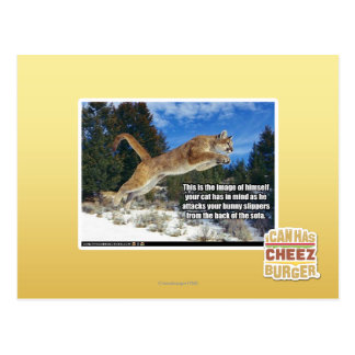 Cat image postcard