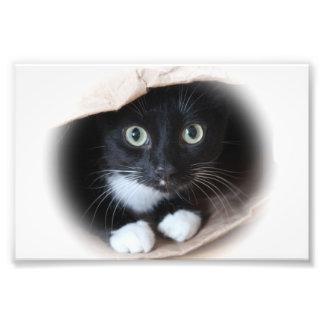 Cat in a bag photo