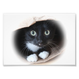 Cat in a bag photo print