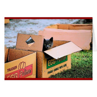 Cat in a Box Christmas Card