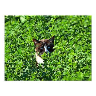 Cat in a Field Photo Art