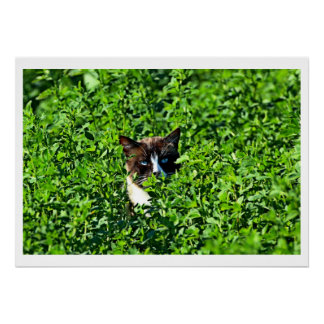 Cat in a Field Posters