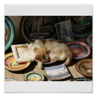 Cat in a h....Bowl Poster
