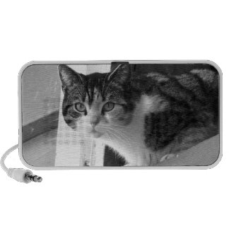 Cat in black and white doodle speakers