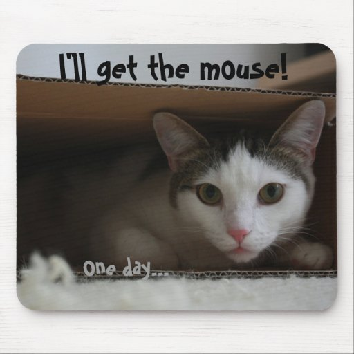 Cat in box tomcat hiding face eyes mousepads