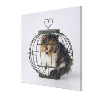 Cat in cage gallery wrap canvas