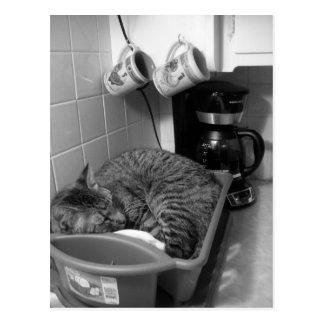 Cat in dish drainer Postcard
