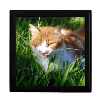 Cat in grass Large Gift Box