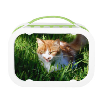 Cat in grass lunch box