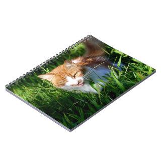 Cat in grass notebooks