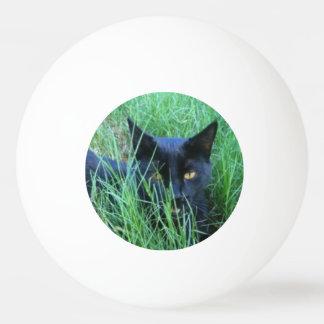 Cat-in-Grass Ping Pong Ball