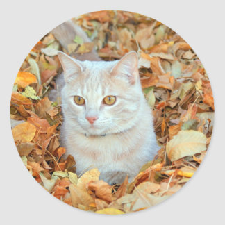 Cat in leaves classic round sticker