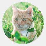 Cat in Nature Round Sticker