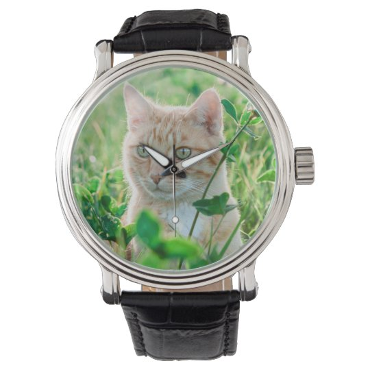 Cat in Nature Watch