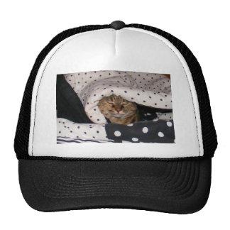 Cat in Polkadot Blanket Hats
