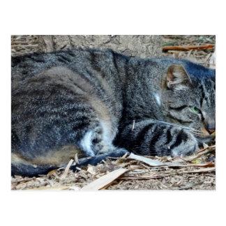 Cat in Sao Paulo Postcard