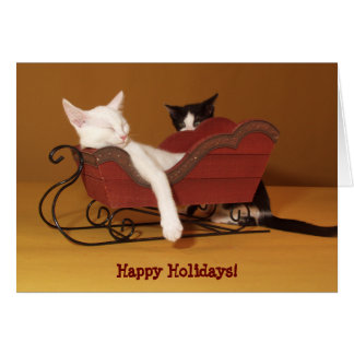 Cat in Sled Humor Christmas Card